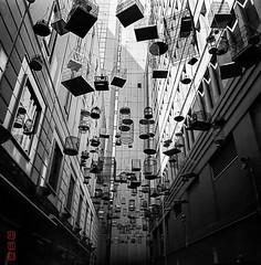 Angel Place (Bill Thoo) Tags: mamiya6 mamiya analogphotography angelplace sydney nsw newsouthwales australia city urban street architecture travel art artinstallation birdcages monochrome bnw blackandwhite film filmphotography mediumformat mediumformatfilm analog 50mm