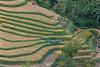 _J5K1622.0814.San Sả Hồ.Sapa.Lào Cai. (hoanglongphoto) Tags: asia asian vietnam landscape scenery vietnamlandscape vietnamscenery vietnamscene terraces terracedfields harvest hill hliiside people landscapewithpeople canon canoneos1dsmarkiii canonef100400mmf4556lisiiusm tâybắc làocai sapa laochải phongcảnh ruộngbậcthang lúachín mùagặt sapamùagặt sapamùalúachín phongcảnhcóngười người