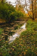 Jardin Compans-Caffarelli Toulouse // 2017 // © F.Lombardo (F.Lombardo) Tags: toulouse south france french sud occitanie occitan tarn garonne couleurs orange automne