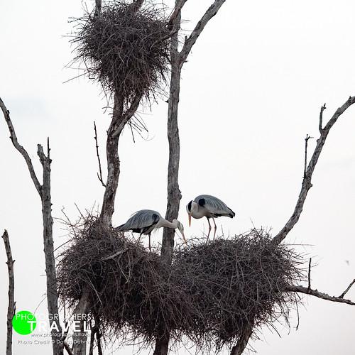 Birds - Sabi Sabi 2017
