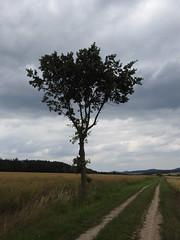 Hartmannshöhe bei Burghaun (michaelausdetmold) Tags: burghaun hartmannshöhe hessen osthessen rhön deutschland natur landschaft