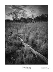 Twilight (baldwinm16) Tags: forestpreserve il illinois places september autumn calm dusk evening fall midwest nature outdoors outside peaceful prairie prairiegrass quiet restful season sunset tranquil twilight natureofthingsphotography omot