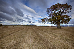 Lone Tree Hay bales_MG_4496 (ronniefleming@btinternet.com) Tags: wheatfields haybales pylons leading lines clouds nature tyre tracks scotland perthshire rollinghills grampians dunkeld highlands hay autumncolours fall winter