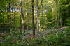 Forêt de soignes, Brussels 5 (gavin.mccrory) Tags: forest nature nikon camera photo trees brussels belgium europe d5100 35mm 105mm dslr photography outside green shrubs plants forests light sunshine reflection rays woodlands
