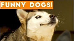 Ultimate FUNNY DOG Compilation | Cute Pets 2017 (abhigyandms) Tags: challenge compilation dogfunny dogs dogsfunny fun funniest funnyanimalvideo funnyanimalvideos funnyanimals funnydog funnydogvideos funnydogvideostrynottolaugh funnydogs funnydogsvideo funnyvideo funnyvideos funnyvideos2016 impossible impossiblechallenge laugh laughing puppies puppy trynottolaugh trynottolaughchallenge trynottolaughorgrin trynottolaughorgrinwhilewatchingthis