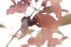 眼 (tsubasa8336) Tags: 目 眼 花 自然 eye nature