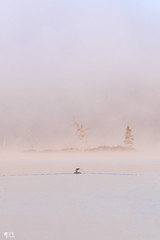 ''Au pays de l'elfe huard!'' Plongeon huard-Common loon (pascaleforest) Tags: brume mist loon oiseau bird animal passion nature nikon kayak paysage landscape wild wildlife faune québec canada ambiance