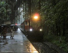 Chugging amidst the heavy rain. (Gautham Karthik) Tags: india kerala shoranur nilambur indianrailways cherukara ers erswdm3a heavyrain passengertrain banyantree trainspotting