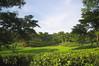 Durgabari Tea Estate Tripura (Abhranil Neogi) Tags: durgabari teaestate tea tripura