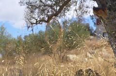 LandART; Kamilari, Pezoules (christianereiser) Tags: landart kunsttherapie kamilari crète pezoules