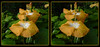 Longwood Gardens Flowers 17 - Crosseye 3D (DarkOnus) Tags: pennsylvania bucks county panasonic lumix dmcfz35 3d stereogram stereography stereo darkonus longwood gardens flowers scenic scenery flower botanical garden popout ttw crossview crosseye