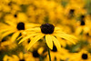 I #LoveAutumn (northdevonfocus) Tags: autumn plant flora floraandfauna flowers bokah