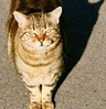 Mojito, the solar cat! (REGOR NOTPUL) Tags: mojito solar powered tabby car glenburnie ontario