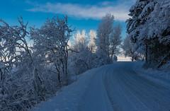 Cerknica Lake (happy.apple) Tags: otok cerknica slovenia si cerkniškojezero cerknicalake slovenija winter morning zima jutro road cesta gorica geotagged
