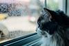 Not Rain, Dirty Window (Premshree Pillai) Tags: chicago illinois il chicagojun16 cat kitty airbnb dirtywindow