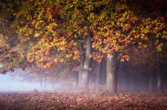 light and dark (Kozics Tibi) Tags: forest autumn color mist foliage fog woodland trees tranquility eos40d canoneos40d