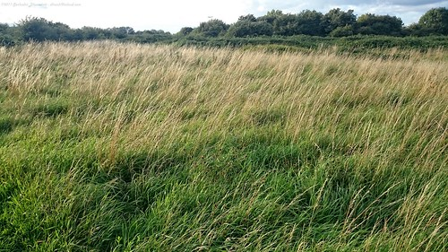 Grasslands - Hounslow Heath Nature Reserve