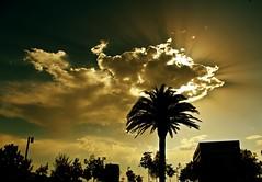 La palmera (portalealba) Tags: zaragoza zaragozaparque aragon españa spain sunset sol nubes silueta portalealba canon eos1300d 1001nights 1001nightsmagiccity