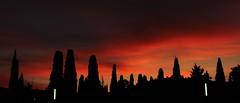 Cipreses (portalealba) Tags: zuera zaragoza aragon españa spain sunset atardecer sol cielo nubes 1001nights 1001nightsmagiccity nwn