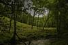 Watersmeet-WoodsAcrossRiver-2-LR (Frank Etchells) Tags: water river devon watersmeet nationaltrust nt