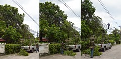 a low wire act (the foreign photographer - ฝรั่งถ่) Tags: tree trimmer men mango pickup truck wire walking our street bangkhen bangkok thailand nikon d3200
