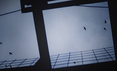 wrońska (wichrzu_wichrzu) Tags: crows birds sky disturbing minimalistic dark autumn