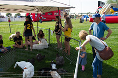 2017 New Student Move In Day-17.jpg (Gustavus Adolphus College) Tags: football gamegame homecoming game pc kylee brimsek petting zoo 20170923 animals outdoor outside students homecomingfootballgame pckyleebrimsek pettingzoo