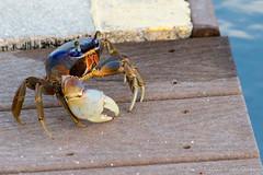 Sittin' on the dock of the bay... (Glotzsee) Tags: nature florida indianrivercounty verobeach outdoors outside marinelife indianriverlagoon indianriver glotzsee glotzseefloridaimages