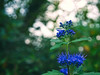 2017-09-22_17-35-36 (torstenbehrens) Tags: nature flower bokeh tarbek schleswigholstein deutschland panasonic dmcg1