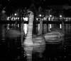 Mr Swan (MortenTellefsen) Tags: 2017 november svaner swan svane swans bw blackandwhite bergen blackandwhiteonly black bird monochrome norway lake city reflection boss chief canon 80d