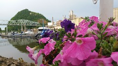 A Touch of Pink (Michel Curi) Tags: travel midwest summer wisconsin hagarcity harborbar marina water bridge bokeh pink flowers flowercolours flowercolors flowerscolors blossom flowerscolours flower landscape nature scenery