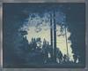 Forest man (Maija Karisma) Tags: polaroid instant pola littlebitbetterscan bulldog schneider schneiderkrauznachsymmar156300112500 8x10 largeformat impossible instantback polaroidback roidweek2017 autumnpolaroidweek autumn expiredfilm