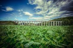 ...GrassBridge... (7H3M4R713N) Tags: bridge fujifilm xt2 1024mm f16 suisse switzerland clouds sky cloudy grass nature architecture train bern swiss ch landscape light
