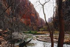 Zion (Fajar Pangestu) Tags: leica leicadlux109 usa america travel trip utah zion nature nationalgeographic nationalpark ngc beautiful canyon valley explore river