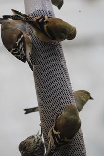 Feeder birds by Russ Allison