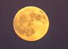 IMG_8365.jpg (luvsd) Tags: harborisland california fullmoon moon skyline sandiego sunset