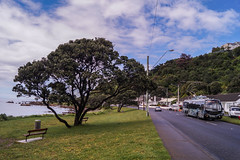 Lyall Bay - Queens Drive (andrewsurgenor) Tags: transit transport publictransport nzbus gowellington electric trackless trolleybus trolleybuses wellington nz streetscenes bus buses omnibus yellow obus busse citytransport city urban newzealand