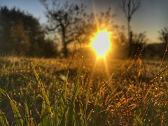 Morgentau auf der Wiese (Blende2,8) Tags: schwabenland morgentau sonne sonnenaufgang bäume obstbäume streuobstwiesen wiese rommelsbach reutlingen badenwürttemberg deutschland himmel iphone