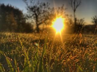 Morgentau auf der Wiese