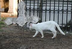 Veja com essas fotos️ a linda história dessa senhora com o seu gatinho branco.  O final será muito parecido com o seu, o meu... o nosso! ,🐈👵  ° . . #gato #cat #oldwoman #woman #destino #historia #reflexão #pensamento #futuro #companheiris (Rafazildo MQS) Tags: destino oldwoman mensagem amigo companheirismo pensamento animal futuro woman gato sentidodavida historia friends reflexão companheiro cat