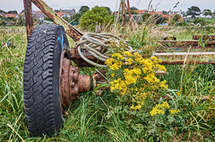 static (scottprice16) Tags: england northumbria northumberland lindisfarne island harbour rust rot static still trailer boat weeds grass tyre autumn august fuji fujixpro2 23mmf2