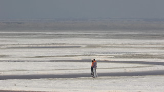Salt Flat Love Birds