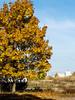 20171015-082 (sulamith.sallmann) Tags: natur pflanzen angermünde autumn baum brandenburg deutschland germany herbst laubbaum nature pflanze plants tree uckermark deu sulamithsallmann