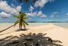 A Dream (grandmich56) Tags: lagonbleu cocotier noixdecoco coconut rangiroa polynésiefrançaise lumière light sand translucide translucent frenchpolynesia 1635 eos5dmarkiv sable arbre ciel plage océanpacifique lagon atoll bluelagoon noddinoir turquoisewater beach