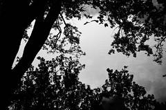 fall day out of town (IV) (gato-gato-gato) Tags: 35mm ch contax contaxt2 iso400 ilford ls600 noritsu noritsuls600 schweiz strasse street streetphotographer streetphotography streettogs suisse svizzera switzerland t2 zueri zuerich zurigo z¸rich analog analogphotography believeinfilm film filmisnotdead filmphotography flickr gatogatogato gatogatogatoch homedeveloped pointandshoot streetphoto streetpic tobiasgaulkech wwwgatogatogatoch zürich black white schwarz weiss bw blanco negro monochrom monochrome blanc noir sviss zwitserland isviçre autofocus landschaft landscape landscapephotography outdoorphotography berge mountains mountain gebirge fels stein stone rock