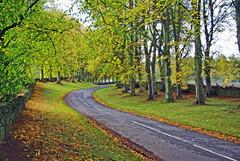 Kinpurnie Boulevard (eric robb niven) Tags: ericrobbniven scotland newtyle angus trees autumn springwatch