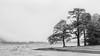 Shoreline (Rob..Hall) Tags: robhall squarephotography england uk lakedistrict buttermere cumbria monochrome blackandwhite trees landscape mist grey