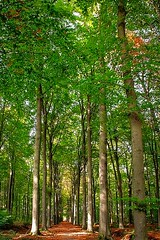 Autumn (JaapCom) Tags: jaapcom jaargetijden autumn herbst herfst trees bomen landscape landed ijsselvliedt wezep veluwe gelderland green holland dutch natural