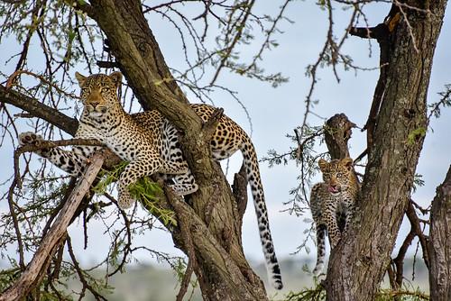 Mara Safari-1998.jpg