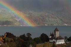 Regenbogen - Rainbow über dem Thunersee mit Schloss Spiez ( Baujahr Ursprung 10. Jahrhundert - château castello castle ) in Spiez im Berner Oberland im Kanton Bern der Schweiz (chrchr_75) Tags: christoph hurni schweiz suisse switzerland svizzera suissa swiss chrchr chrchr75 chrigu chriguhurni chriguhurnibluemailch oktober2017 oktober 2017 albumzzz201710oktober regenbogen rainbow arcen arcobaleno レインボー duga regenboog tęcza arcoíris arco iris albumschlossspiez schlossspiez spiez kantonbern berner oberland berneroberland schloss château castle castello kanton bern thunersee alpensee see lake lac sø järvi lago 湖 albumthunersee